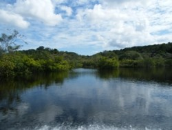 View of the Amazon waters and rainforest on either side in Brazil