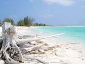 Tree and white sand