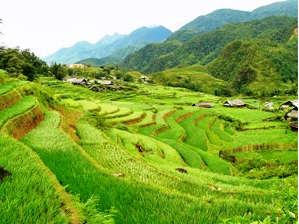 Luscious green rice terraces in Sapa Vietnam