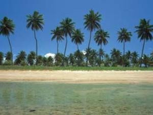 Palm tree beach in Porto Galinhas, Brazil