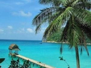Turquoise sea and palm tree