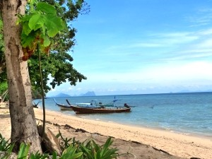 Beach with boats and a tree