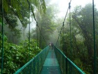Canopy bridge in Monteverde cloud forest