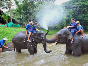 Bathing with elephants in thailand
