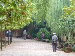 locals walking under green trees in shaxi