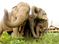 Ethical Elephant Experiences   Our Journey