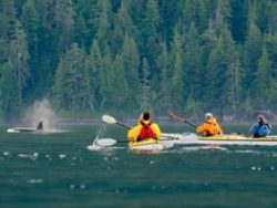 People Kayaking with Whales in Port Mcniell